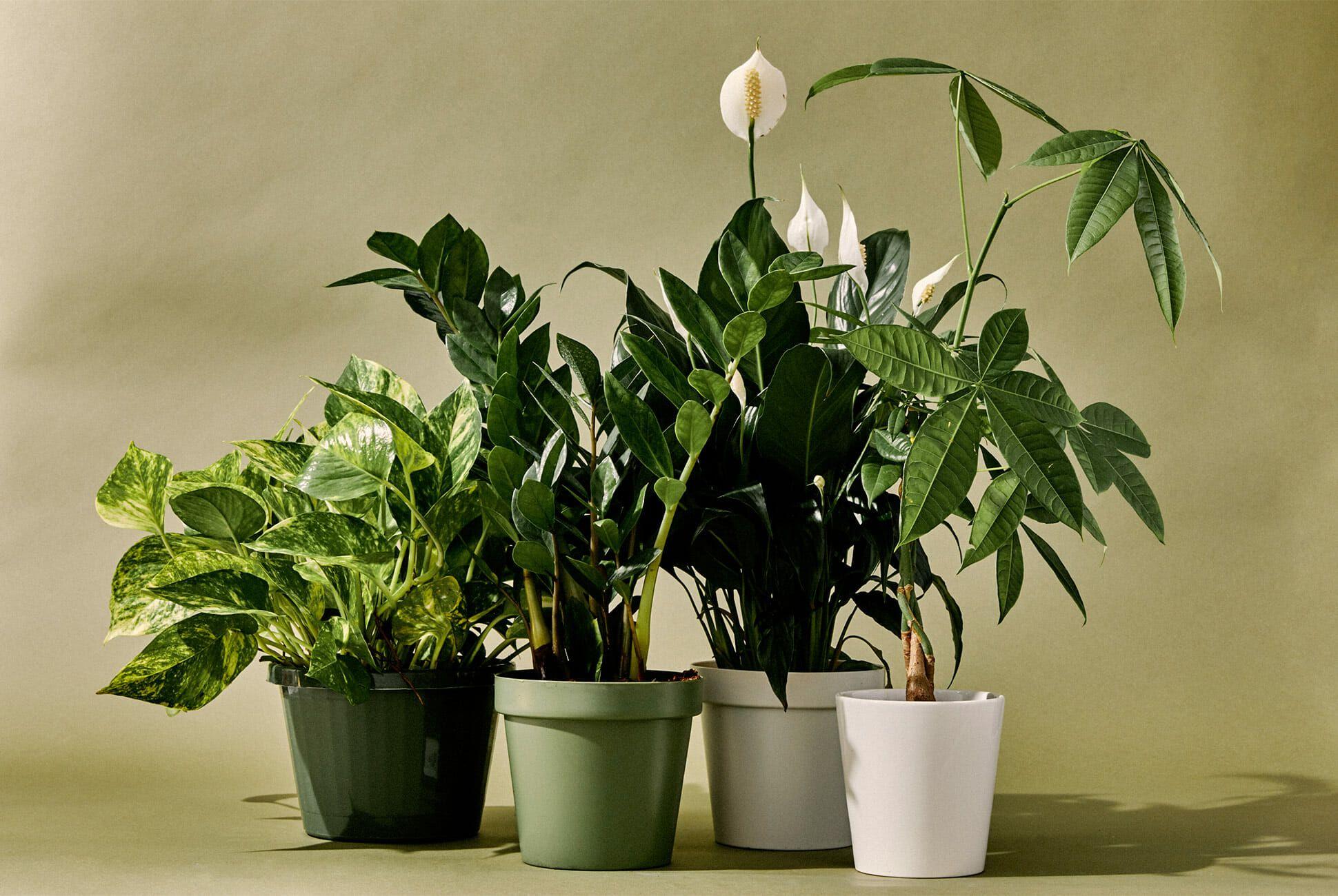 طراحی فروشگاه اینترنتی گل و گیاه ندا